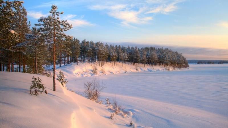 Dreamstime - Carélie - forêt neige